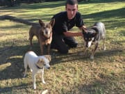 Reliable, Caring Pet sitter, Has Time, Experience