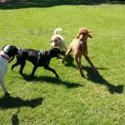 Loving pet minder and dog walker - Malvern