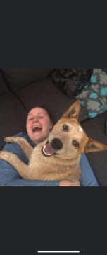 Reliable, caring pet sitter that loves cuddles