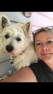 Westie-mad pet sitter in The Gap. Small dogs welcome!