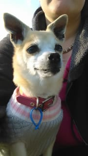 Reliable and Caring Pet Sitter and Animal lover myself.