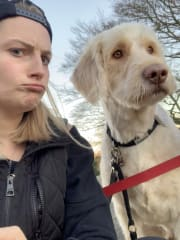 Reliable, experienced, active and caring Brit missing dogs