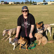 Dog Daycare Geelong