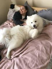 Melbourne Pet sitter - Mature/Active/Reliable