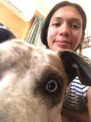 Best pet pal and carer in North Brisbane