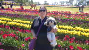 Reliable and caring dog walker available for Ringwood, VIC area