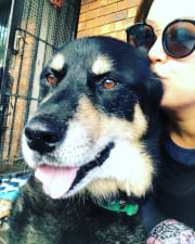 Kingsford location. Tripawd fur-son, great with Senior pets