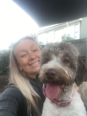 Experienced Mature Reliable Dog & Cat Loving Sitter/Carer/Walker. ??