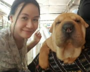 Responsible and reliable pet lover in Ultimo