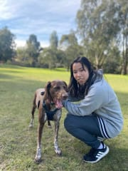 Flexible, all-rounder, reliable dog sitter