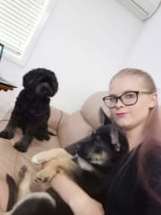 Caring and Attentive Pet Sitter