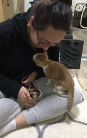 Reliable, Friendly and Caring Cat Lover!