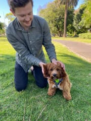 Reliable & Caring Pet Sitter with backyard in Prahran/Windsor