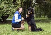 I am excited about training/walking with all sized dogs