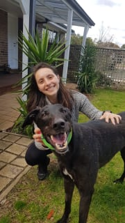 Reliable, patient and affectionate dog sitter