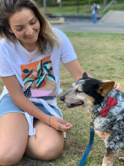 Animal lover, caring and reliable pet sitter livint at Randwick