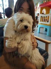 Patient and kind pet sitter