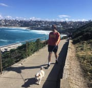 Surry Hills based experienced dog-sitter and animal lover