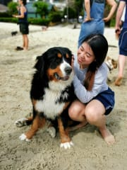 Reliable, experienced and friendly dog carer