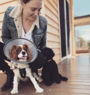 Caring, conscientious and flexible pet sitter