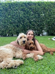 Reliable pet sitter and dog walker in Kew/Hawthorn