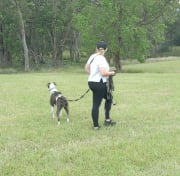Certified Professional Dog Trainer & Canine Behaviourist