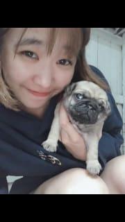 Pet lover and Reliable pet sitter