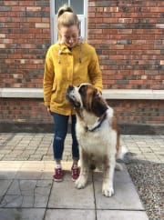 Reliable, organised and active dog lover based in Randwick