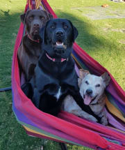 Doggie Heaven in the Suburbs