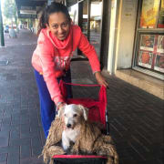 Dedicated & Loving Dog Sitter in East Victoria Park