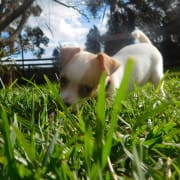 Gerringong Pet Accommodation and In Home Services.