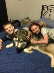 Loving pet family near Highfields Toowoomba
