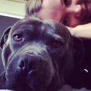Responsible Pet Dog/ Cat Minder/ Sitter
