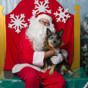 Pampered Pets in Murarrie :-)