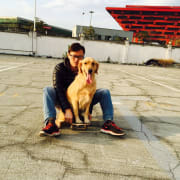 Dog lover raising golden retriever three years with 6 puppies born