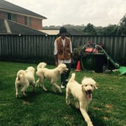 Joni's Dog Paradise in Bateau Bay