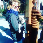 Responsible dog sitter and walker in Port Macquarie