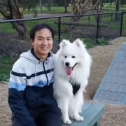 Reliable and caring dog walker and pet sitter