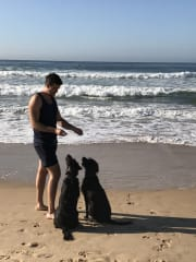 CaninePT - Personal Trainer for your dog!