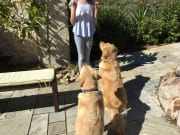Devoted and caring dog sitter The Gap