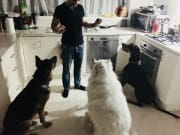 Loving home with massive backyard & GSD friend-for your dog