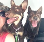 Currumbin Valley animal lover, happy to help you care for your pet