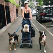 Zetland Family Dog-Care