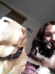 caring, fun and reliable pet sitter/dog walker in edithvale