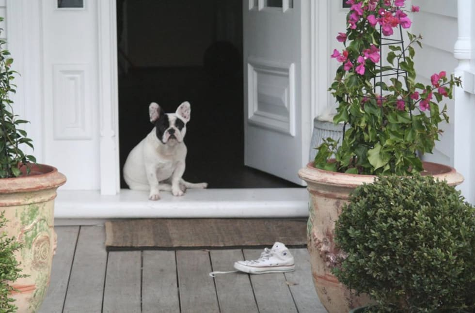 Aston O  - Pet Sitter in woollahra NSW - Mad Paws