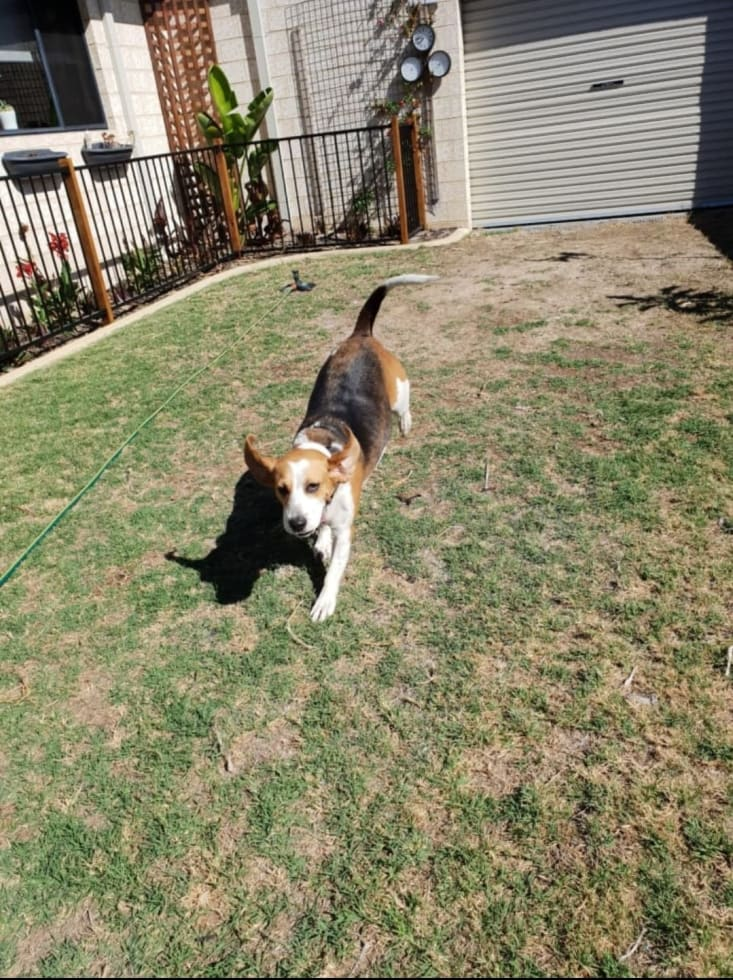Relibable, caring, trustworthy, experienced and loving pet sitter