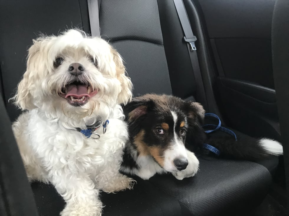 Eilidh C  - Pet Sitter in North Curl Curl NSW - Mad Paws