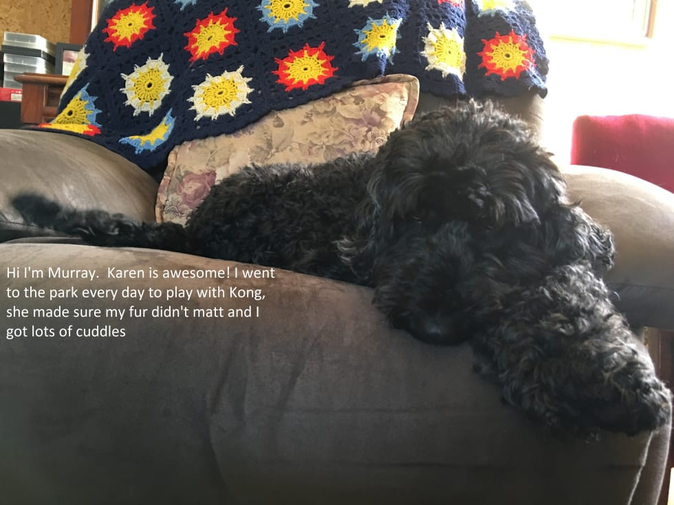 Mature, caring and reliable professional pet sitter/walker