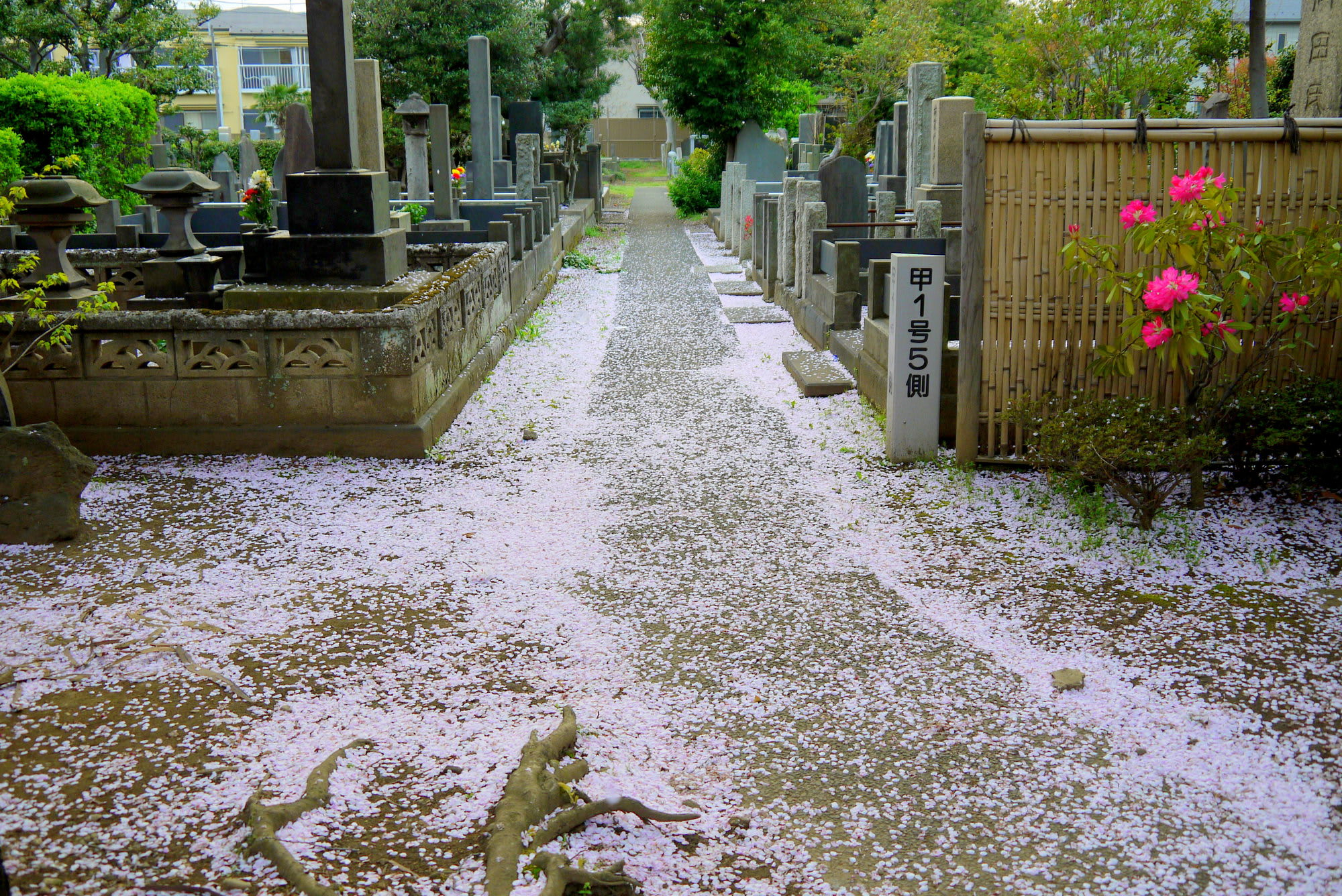 Try OAHANAMI, Cherry Blossom Viewing to Experience Japanese Way to Enjoy Spring!