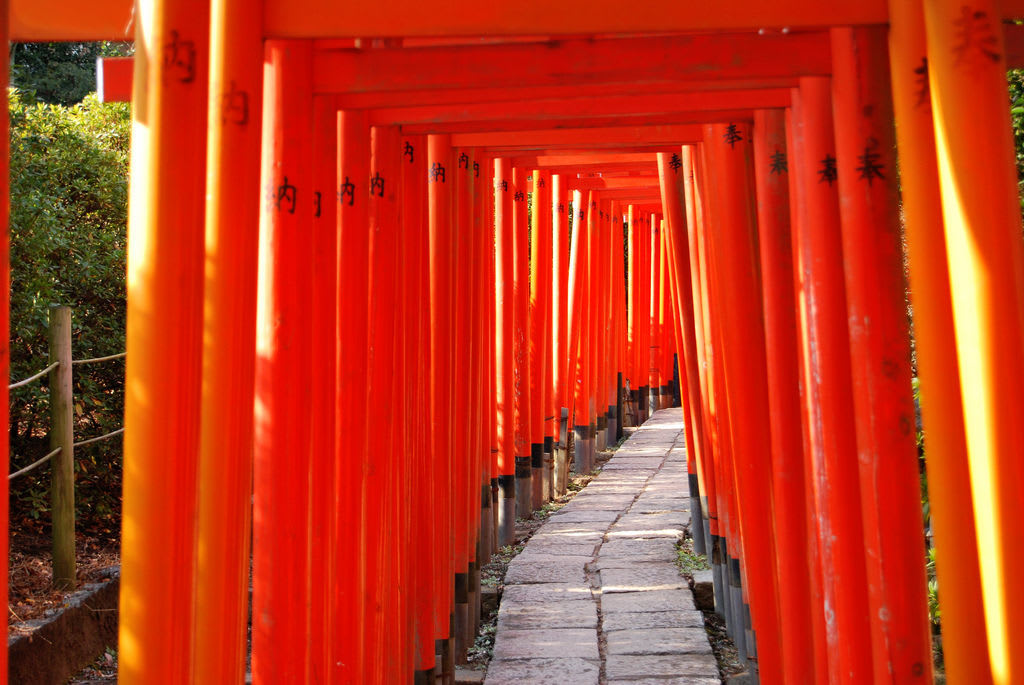 Enjoy the Mysterious Power at Impressive 1,000 of Torii Gates!